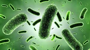 Microbios para biocombustible