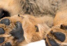 almohadillas perro