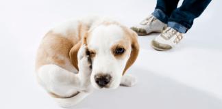 dermatoligia veterinaria