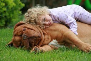 Probióticos para perros
