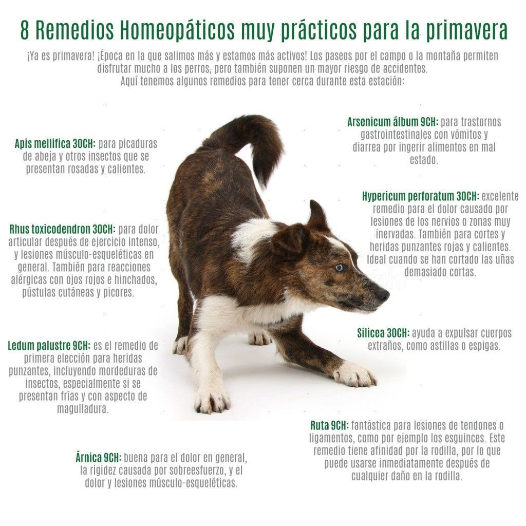 remedios-homepaticos-veterinaria