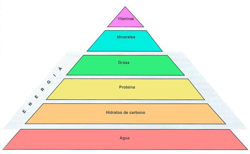 La medicina ortomolecular - Vitaminas para plantas de interior ...