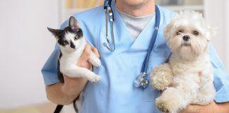 veterinarios profesionales