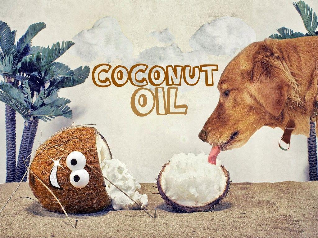 Ayudar a los problemas de la piel en perros y gatos con aceite de coco