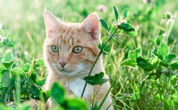 veterinaria natural gatos