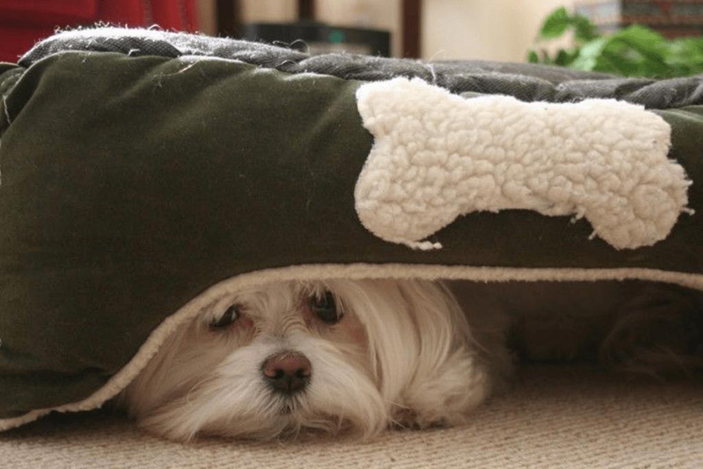 perro con miedos al ruido